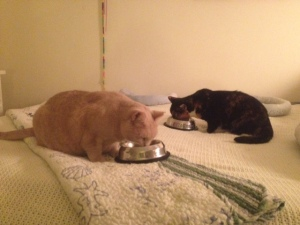 My feline girls at feeding time.  Yes, they always get fed on the bed!
