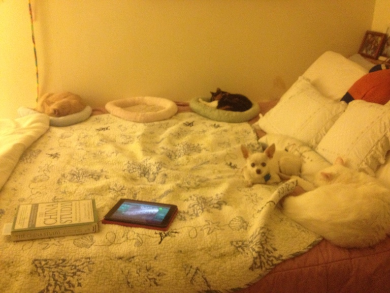 Now where do I sleep?? (clockwise: HoneyBun, Callie, Osito and Max)
