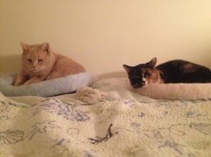 My baby girls, Callie and HoneyBun. So cute and snuggly (HoneyBun is kneading her bed in bliss.)