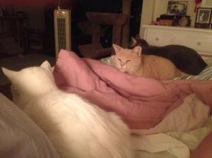 Three of my babies: Max, HoneyBun and Sebastian