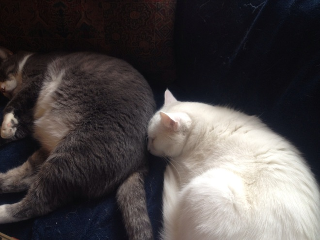Some days, it's better to just go back to sleep like my boys.