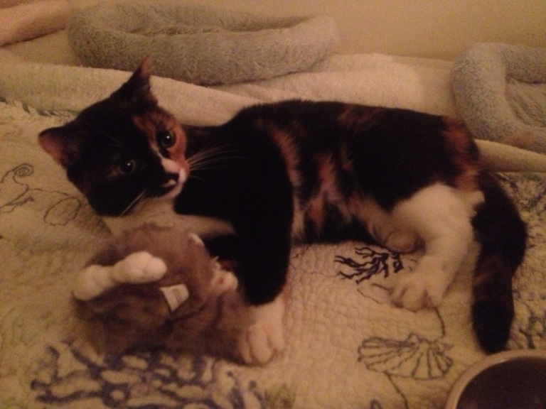 Yep, it's another cute pet photo - my Callie!! She's teeny-tiny!