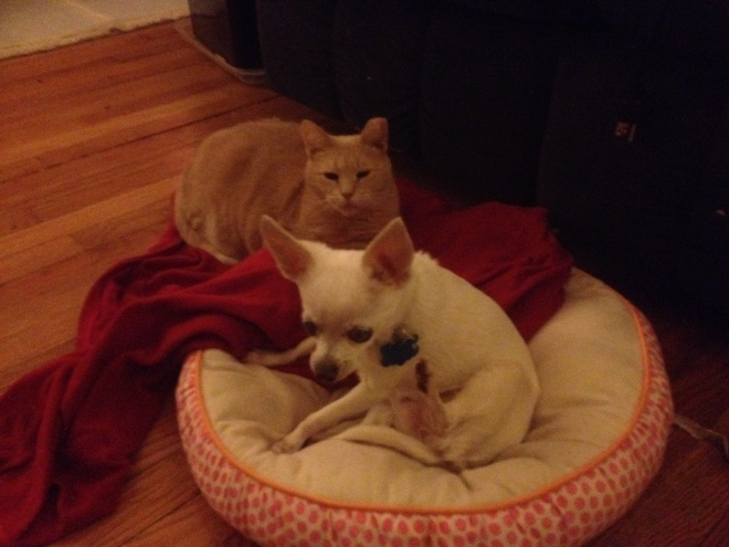 Another cute pet photo - HoneyBun and Osito. HoneyBun has recently discovered the softness of Osito's bed. :-)