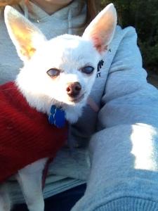 Doesn't my baby girl Osito look like she's smirking?? :-)