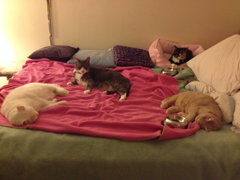These four have never been together on the bed at one time!!