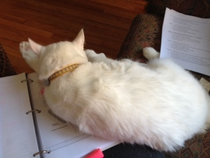 That's ok, Max, you just go ahead and lie right there. It's not like I was actually reading that or anything.... :-)