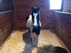 My buddy, Ross, the pony!!