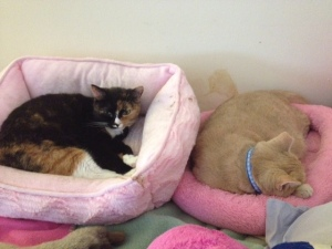 My ladies, in their girly pink princess beds. <3