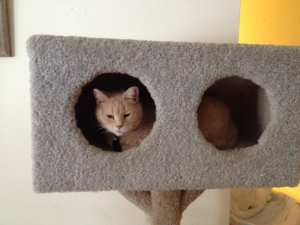 Just when I wondered whether I should keep my cat condo, this happened.  <3 HoneyBun!
