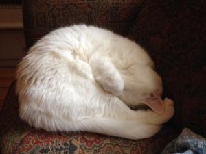 Max, my diva....sleeps