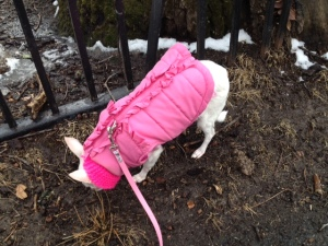 All bundled up for the first walk of spring -a sweater, a jacket and a scarf! I <3 Osito.