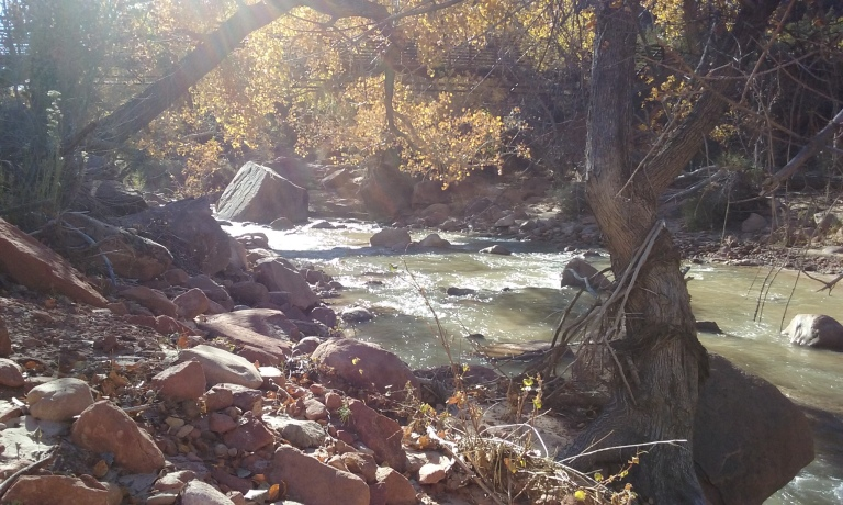 I decided to take a moment to pause and breathe, and read a bit, near the Virgin River. I loved listening to the sound of the water. It calms me.