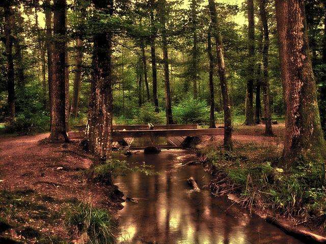 forest-110900_640.jpg