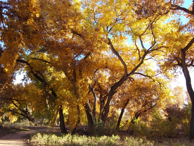 trees with path.jpg