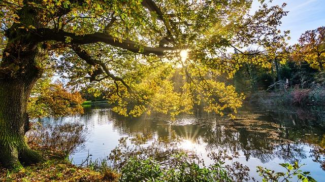 autumn-2963219_640.jpg
