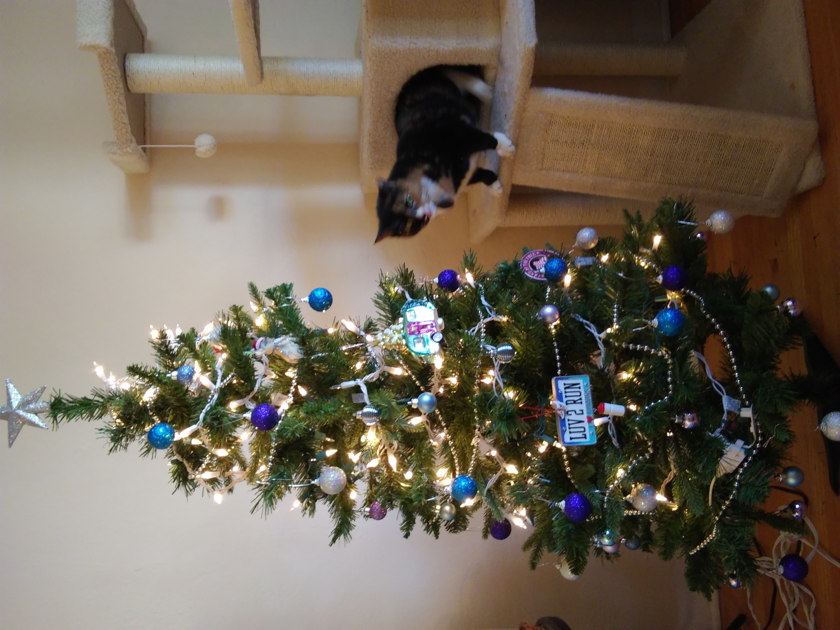 callie and tree.jpg