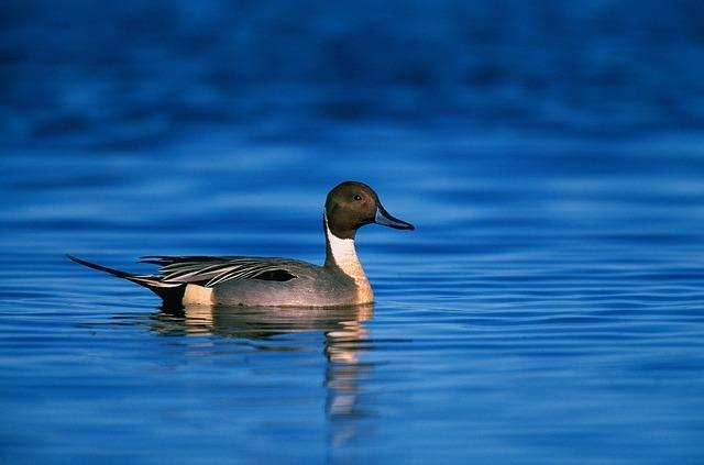 Keep paddling, keep paddling, keep paddling, don'tstop.