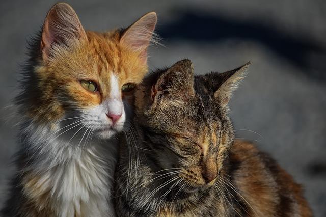 cat-3041498_640.jpg