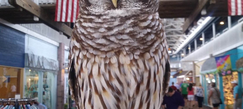 All About Animals: BirdsEdition